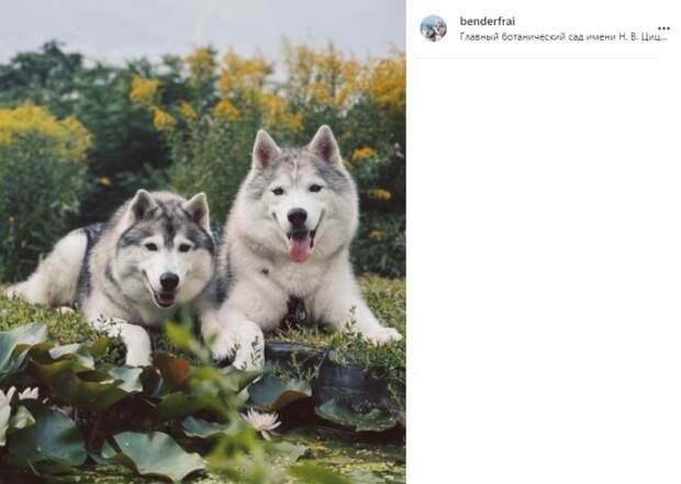 Фото дня: собакам устроили фотоссесию в Ботаническом саду