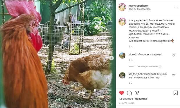 Фото дня: во дворе дома на Полярной соорудили курятник