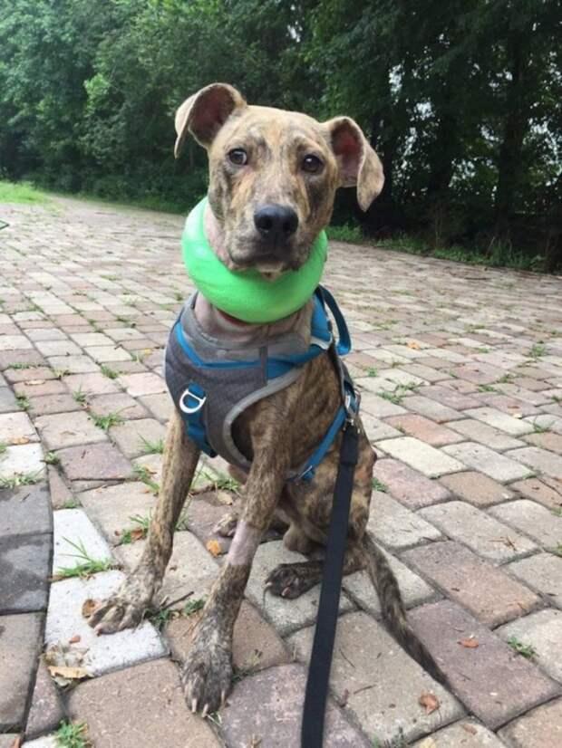 В своем сарае женщина нашла чужую собаку, которой срочно нужна была помощь