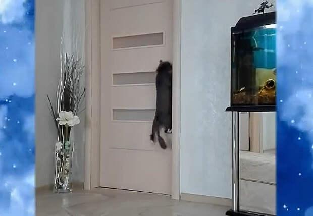 Кот и дверь! Неудачная попытка
