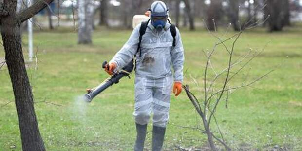 В Краснодаре начнется обработка парков от клещей и комаров