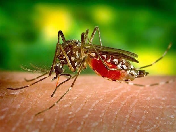Энтомолог Иванов: Погода в ближайшие недели повлияет на численность комаров