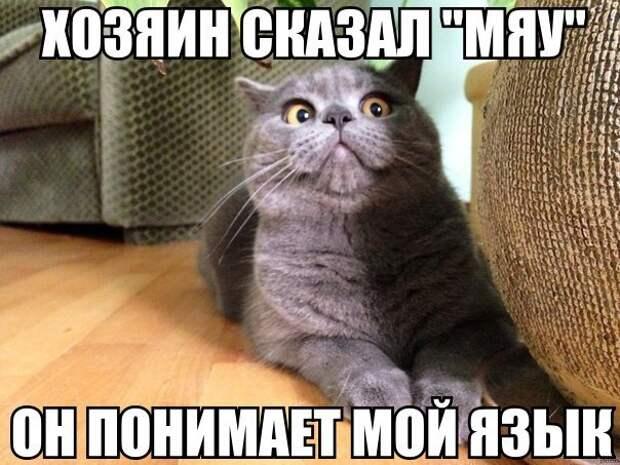 yV9ywGE36v0