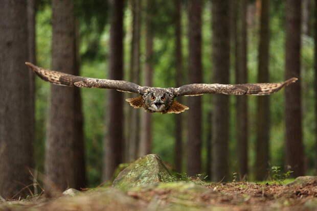 Самые мудрые и сердитые птицы в мире - совы (40 фото)