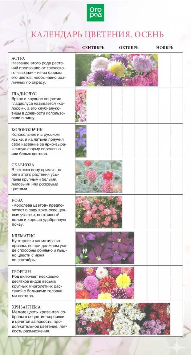 цветочный календарь на осень