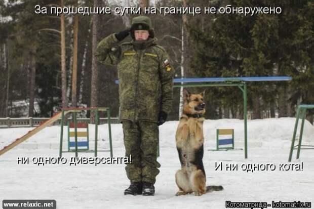 Котодром - 26 от Михалыча