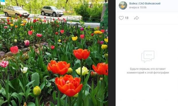 Фото дня: цветочная поляна на Ленинградке