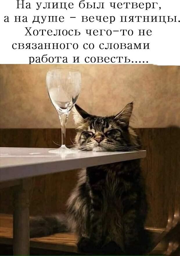 Чем меньше женщину мы любим, тем толще кошка у нее...