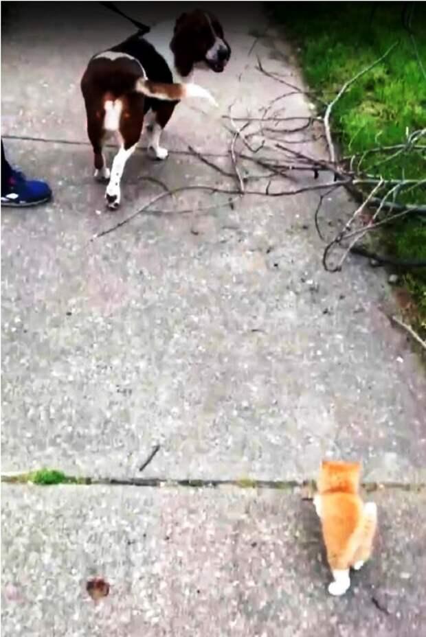 Уличный котеныш так мечтал о доме, что храбро побежал его искать. И нашел!