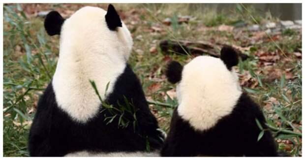 Кроха и мама: 10 забавных фотографий животных с их малышами