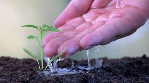 Перелив грозит рассаде болезнями