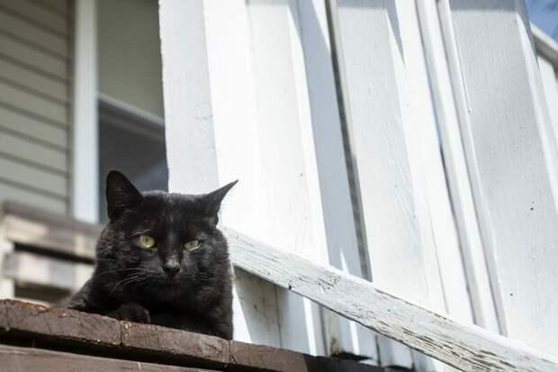 Это кот Локи, которого 3 года назад приютил Нэйтан Сонорас из Мичигана в мире, домашний питомец, животные, история, кот, похороны, чудо
