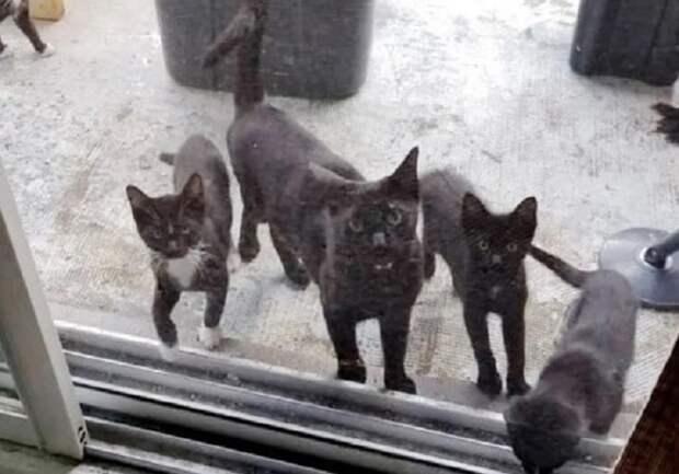 Кошка с котятами стоит