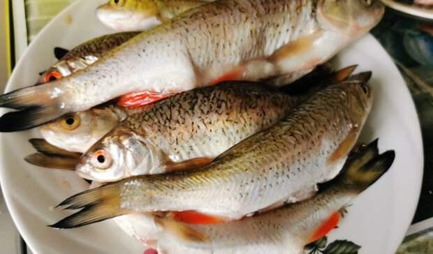 За незаконную ловлю рыбы оренбуржец может получить тюремный срок