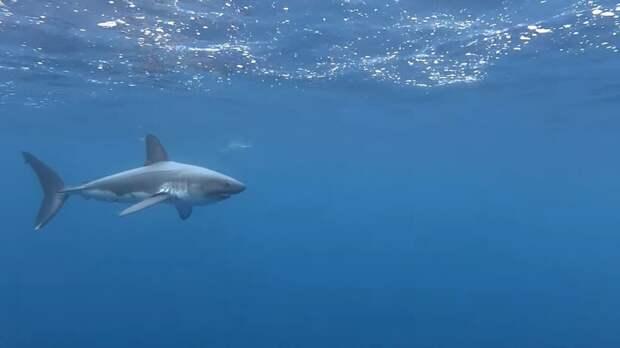 Видео: Как акулы чешут себе спинку, и зачем они это делают
