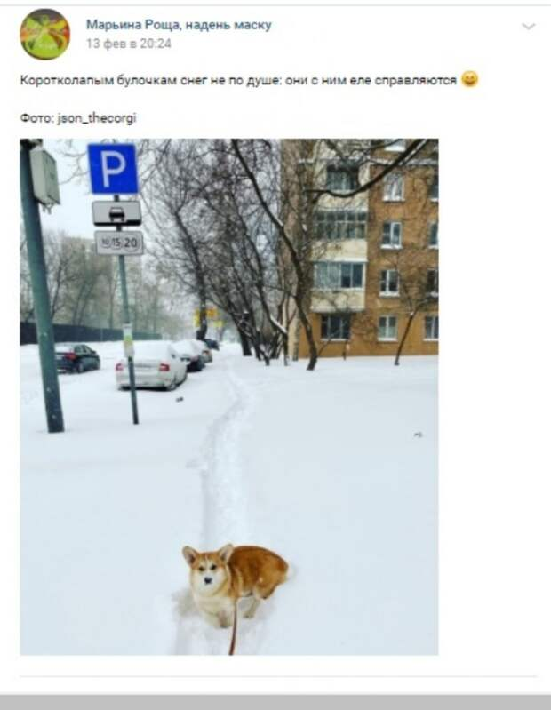 Фото дня: корги по уши в снегу
