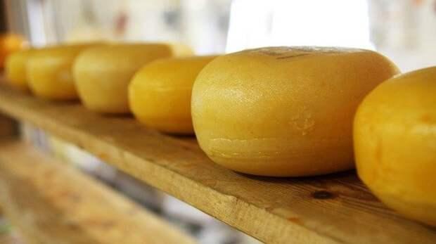 В Севастополе сожгли 8 кг запрещенных сыров
