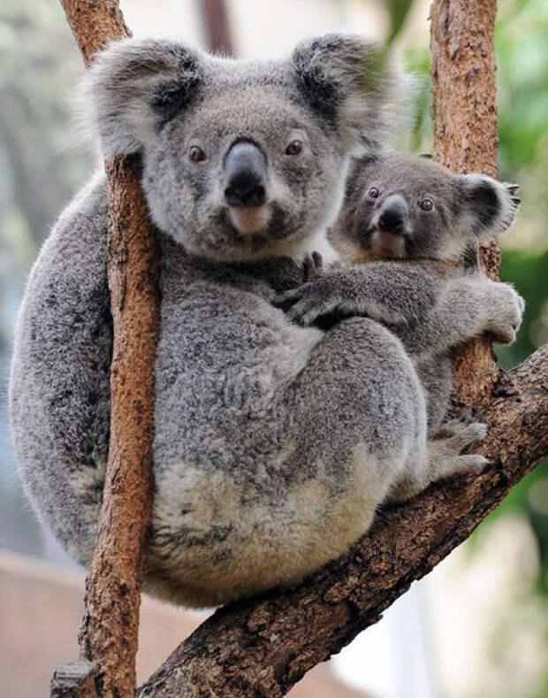 Прикольные и классные фотографии животных
