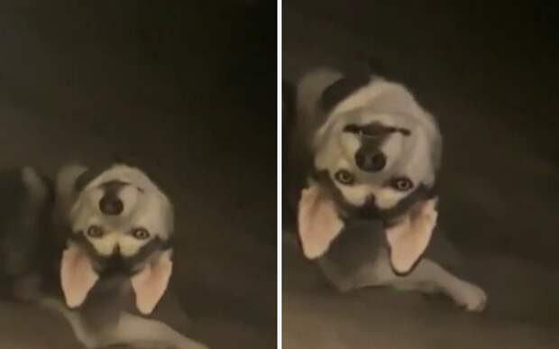 «Что ты такое?»: собака доказала, что экзорцист нужен не только кошкам