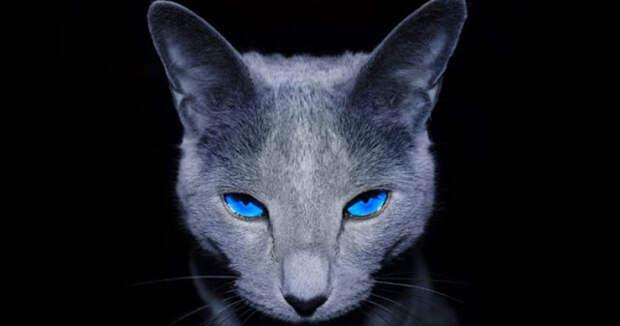 Тёмно-серая кошка: кошка мудрости