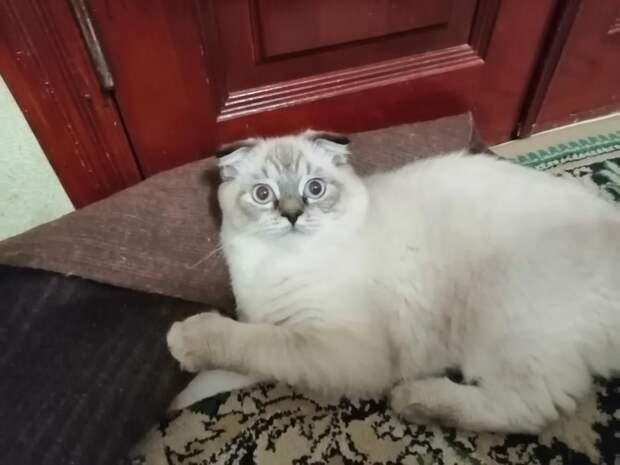 К дому девушки подбросили котенка. Малыш был слабым, но чувствовал, что незнакомка его не обидит