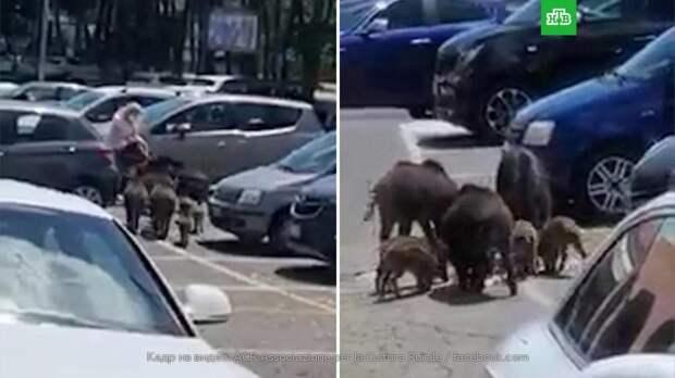 Кабаны отбили у женщины пакеты с продуктами в пригороде Рима