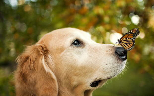 1. Собаки способны к эмпатии собаки, факты