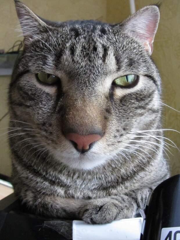 Кошачья нефотогеничность: 20 фото мурлык, сделанных немного не вовремя…)