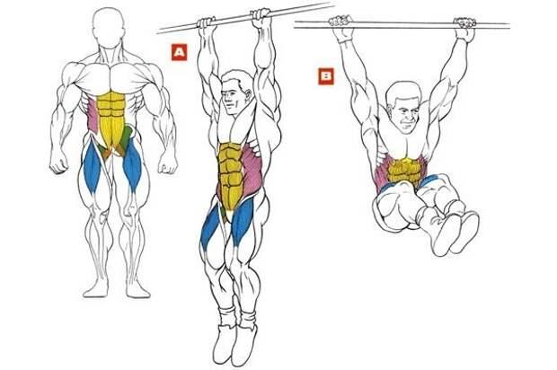 Рабочие мышцы при подъёме ног в висе