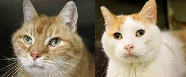 """Пожилой кот """"уговорил"""" свою новую хозяйку вернуться в приют и забрать оттуда своего еще более старого друга"""