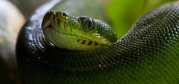 Вы не поверите: нашли змей, которые охотятся стаями