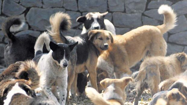 Жители Алушты боятся выходить на улицу — дикие собаки атакуют прохожих