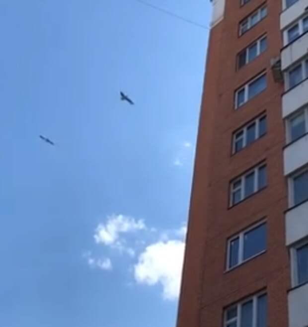Фото дня: на Полярной заметили буревестника