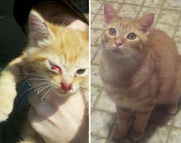 15 трогательных историй спасения брошенных кошек на фотографиях «До-и-После»