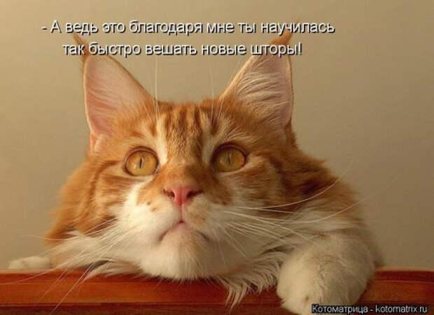 1556890794_kotomatricy-18 (500x364, 110Kb)