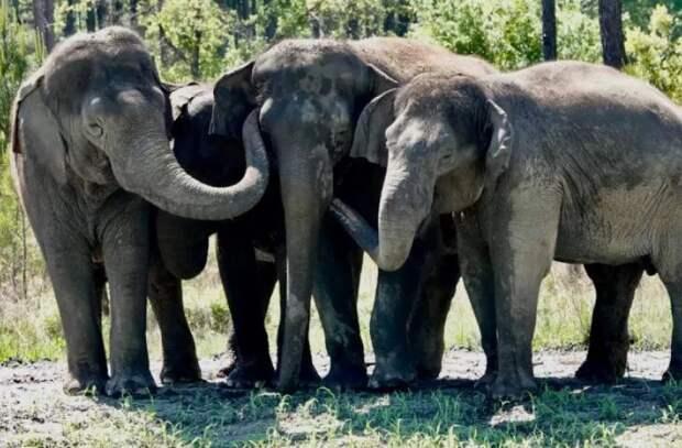 Цирковые слоны отправились на пенсию