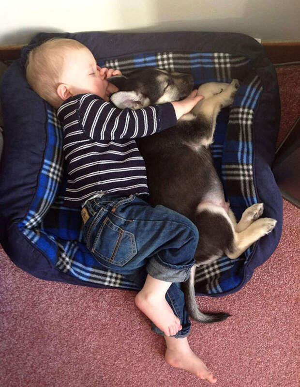 Услада глаз: малыши спят в обнимку с песиками