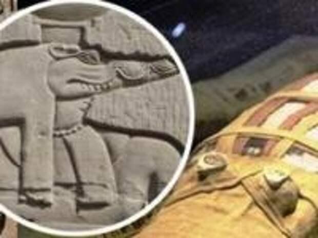 Город гадов Крокодилополь: Как египтяне поклонялись богу с головой рептилии и зачем им тысячи мумий крокодилов