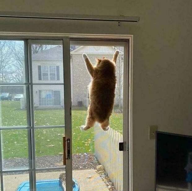 10+ смешных фото кошек, которые ненадолго вышли из строя