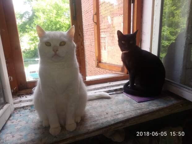 коты на окне