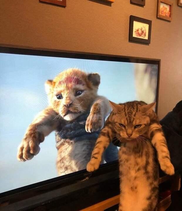 Реальная жизнь пострашнее будет животные, коты, смешные картинки, юмор