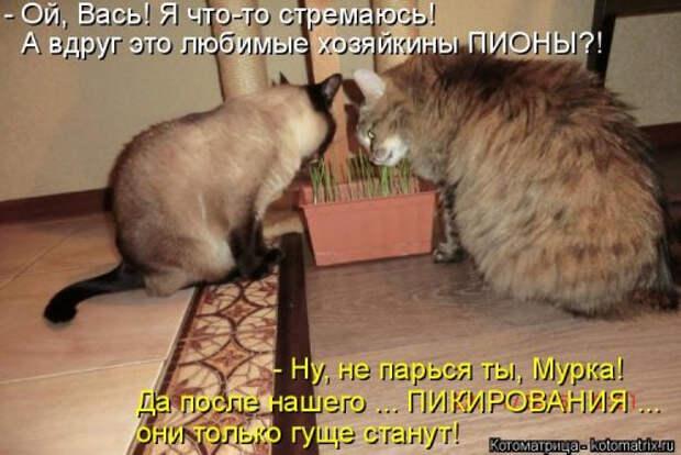 1556890823_kotomatricy-20 (500x334, 145Kb)