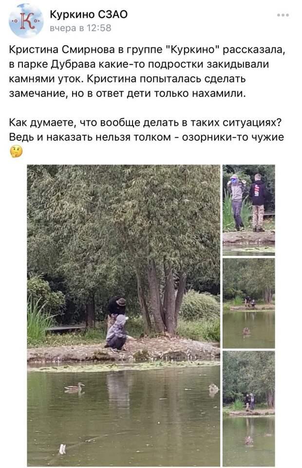 В парке «Дубрава» подростки закидали уток камнями
