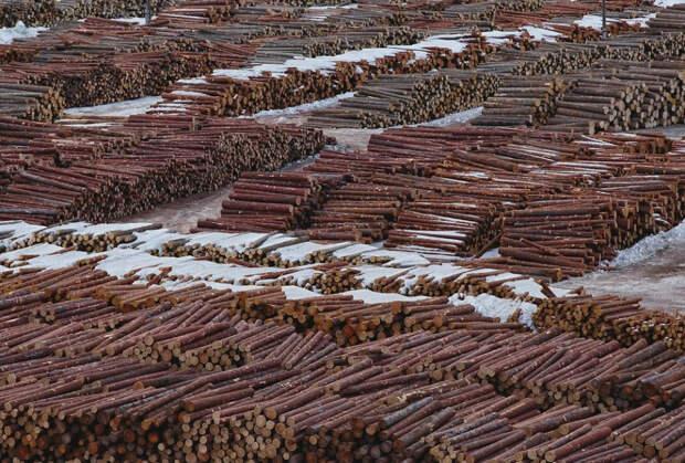 Это постановление президента спасет русский лес