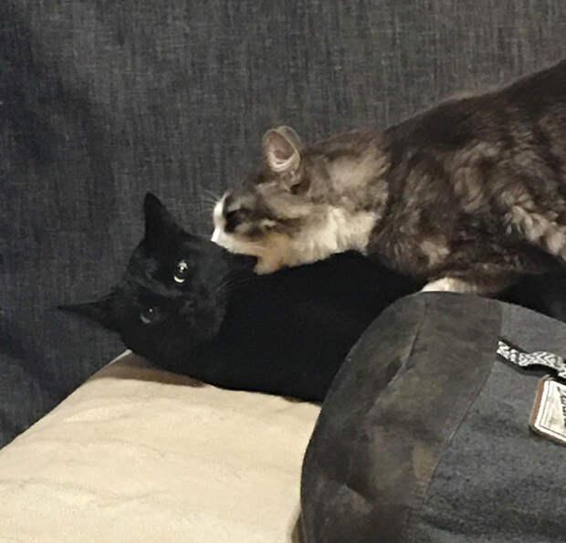 Чтобы не дать заскучать своим людям, 16 котов трудятся не покладая лапок
