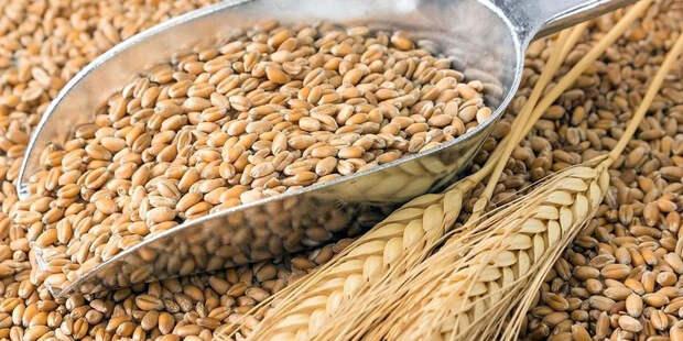 Россия повышает налоги на экспорт зерна