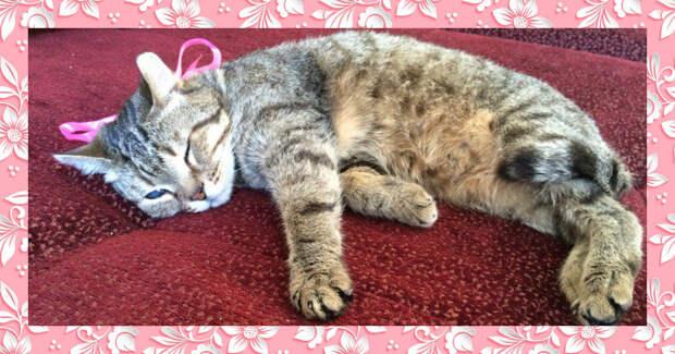 «Чудный котик, но слепой…» Однажды Чешира сбила машина — зато он принёс счастье в новый дом!