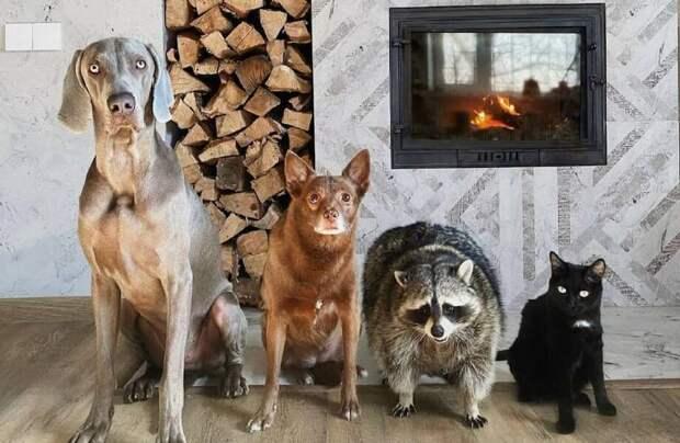 6 животных из России, которые стали звездами Instagram
