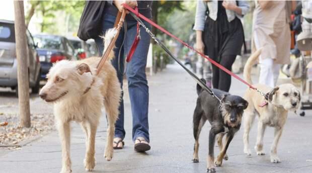 Сколько зарабатывает выгульщик собак в Германии?