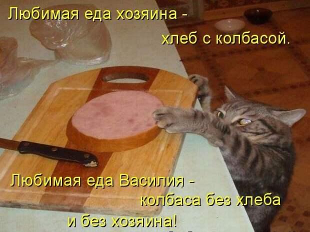 1450431444_kotomatrica-25